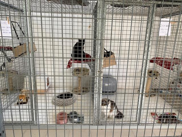 Kattenpension (3)