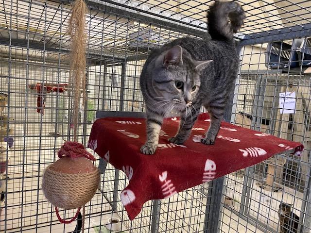 Kattenpension (5)