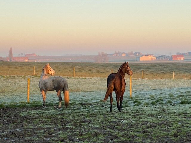 paardenhotel (1)