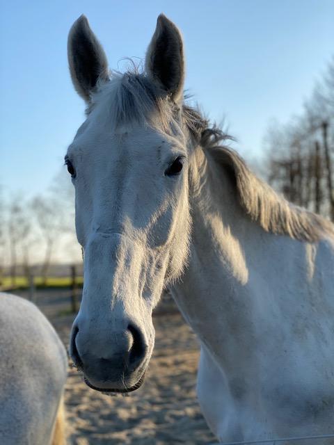 paardenhotel (2)