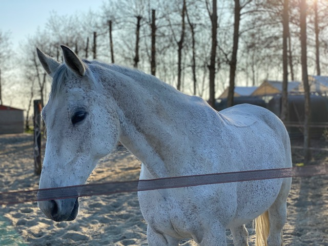 paardenhotel (4)