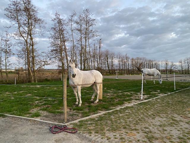 paardenhotel (5)