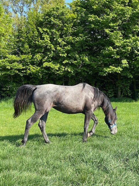 paardenhotel (6)