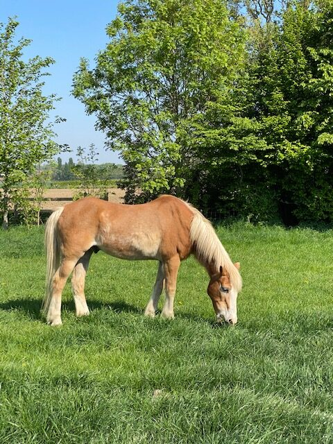 paardenhotel (7)